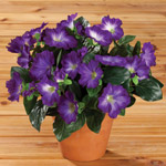 Artificial Petunia Potted Bush
